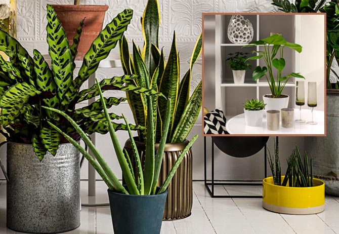 IMG #2_Plants